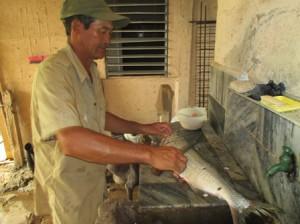 魚をさばくエドワルド(ヨシ子さんの夫)、日系人は魚好き