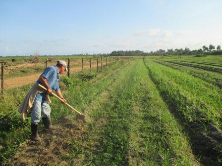 アルベルトの畑、草取り風景