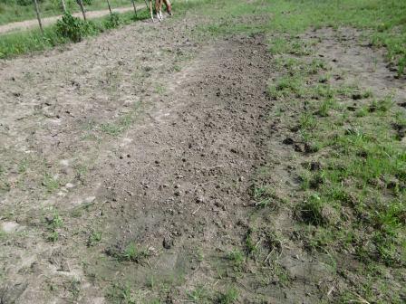 シロレドンドのアルベルトの田んぼ、ここに種をまいたのだが、芽が出ていない
