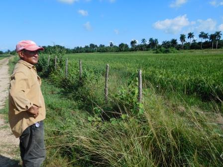 アルベルトの田んぼ、8月13日は種。11月下旬収穫