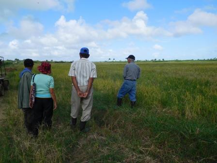アルベルトの田んぼをフカロの人達が視察に来た風景